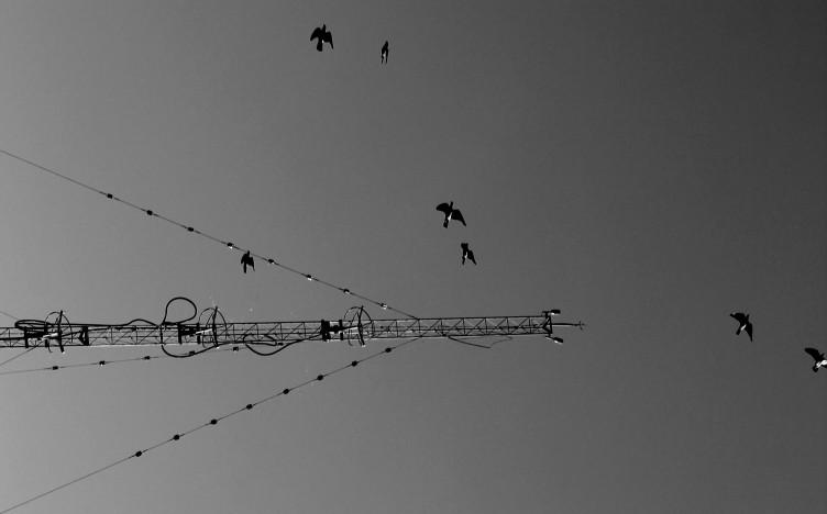 notas de liberdade no ar \ foto © Elza Cohen | o Céu de Montes Claros |MG |Brasil IMG_2736