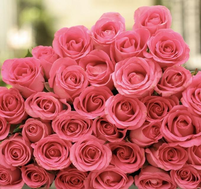 fflor rosa42724